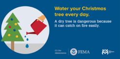 water your Christmas tree everyday