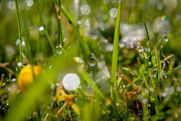 droplets-of-water-on-blades-of-grass.jpg