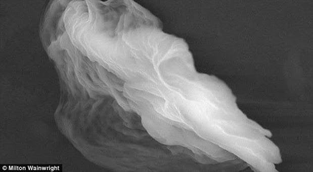 Estructuras espectrales denominadas 'partículas fantasma' o 'globos de vida' (FOTO) podrían contener extraños organismos microscópicos.