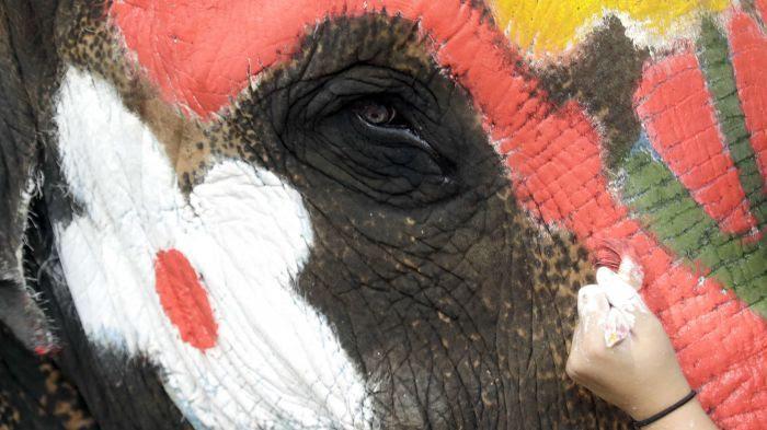 L'insoutenable tristesse de l'éléphant