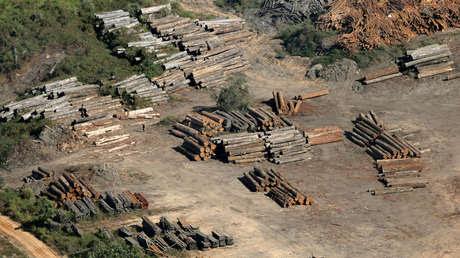 Madera de tala ilegal en el interior en el estado de Amazonas. 27 de julio de 2017.