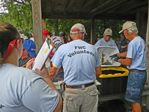 Highlands Lakes Volunteers collecting fish data