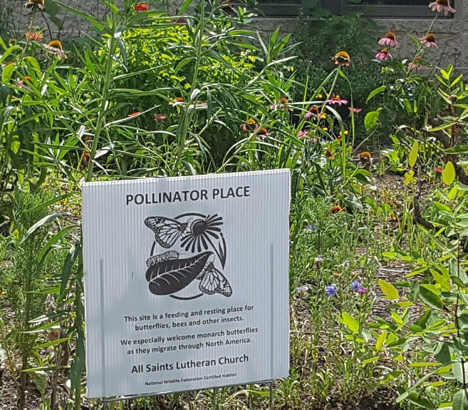All_Saints_Luteran_pollinator_garden.jpg