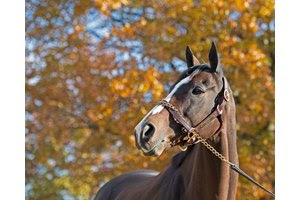 Projected will be offered by Mill Ridge Sales at the Keeneland November Sale