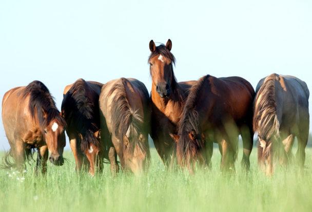 horses grazing on grass