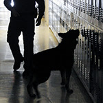 dog and officer searching                                           lockers