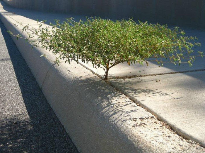 Жизнь всегда найдет путь дерево, живучесть, жизнь, мир, планета, растительность, фото