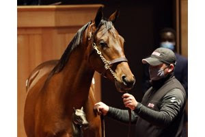 The session-topping Quality Road colt consigned as Hip 498 in the ring at the Fasig-Tipton October Yearlings Sale