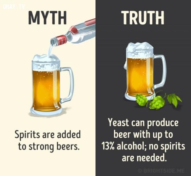 7. Cồn/rượu mạnh được cho thêm vào bia để gia tăng độ mạnh. Sự thật là men có thể sản xuất bia với lượng cồn lên đến 13%, không cần thiết phải cho thêm cồn/rượu mạnh vào.,nhận thức sai lầm,các loại thức uống,khám phá,sự thật thú vị,những điều thú vị trong cuộc sống