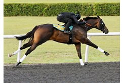 The Not This Time filly consigned as Hip 1254 works a quarter mile in :20 1/5 during the OBS Spring Sale under tack show