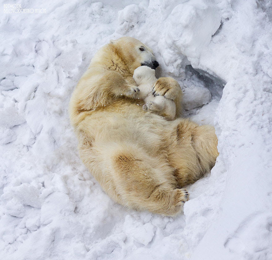 http://www.boredpanda.com/cute-animal-parenting/?image_id=animal-parents-3-2.jpg