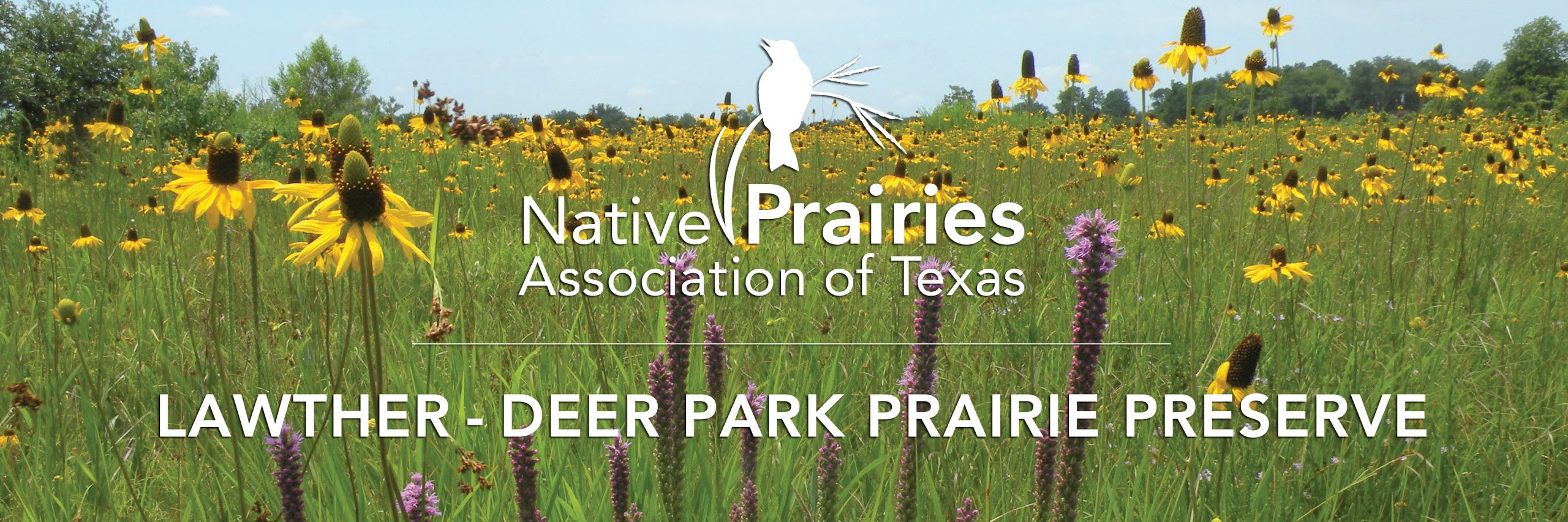 https://hnpat.wordpress.com/deer-park-prairie/