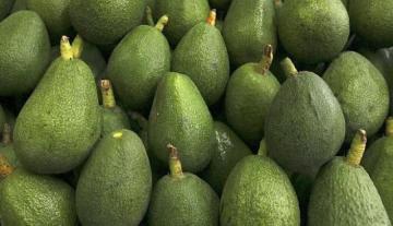 Comex Perú: Agroexportaciones no tradicionales a la Unión Europea crecen en valor 24.3% en los primeros cuatro meses del año