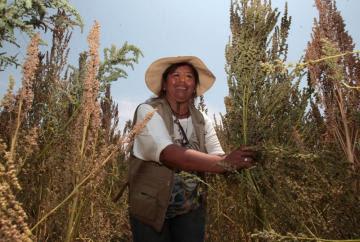 Más de medio millón de mujeres ocupan actividades agropecuarias en el país
