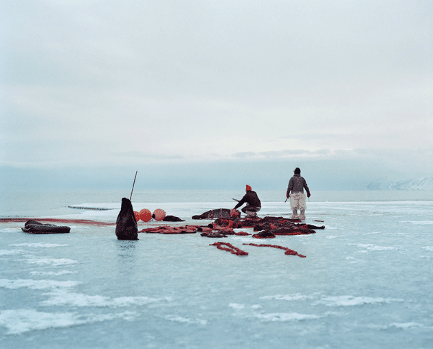Hunters cut up seals at the edge of the sea ice near Qaanaaq © Sébastien Tixier
