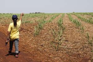 Damiana, una mujer guaraní, realiza una ceremonia en su tierra. Lo que antaño era una zona boscosa, ahora es una extensa hacienda.
