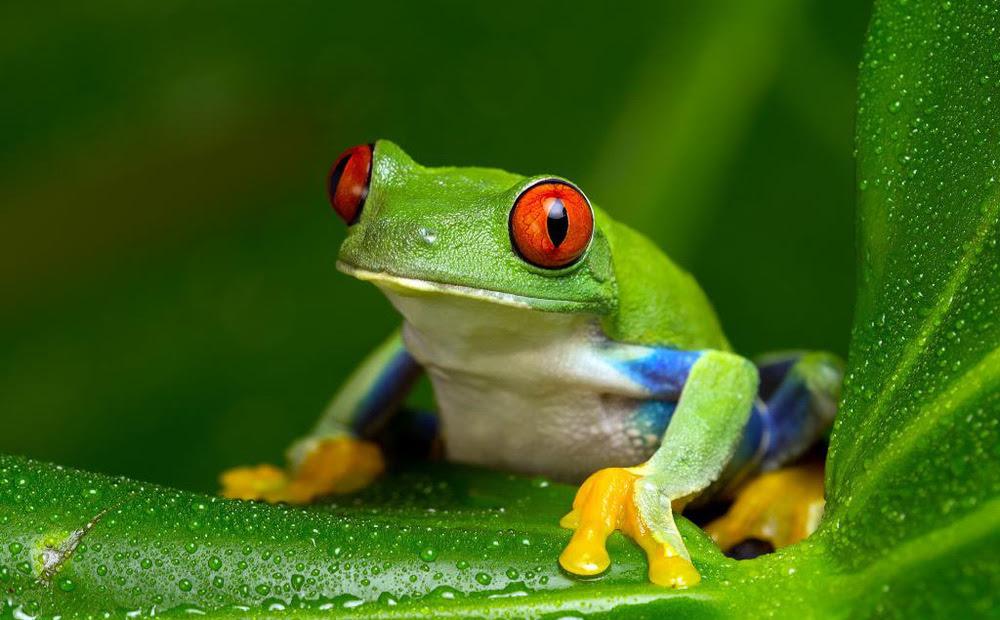 Nhiệt tình chỉ đường cho cua, ếch bị rủa là đồ chết tiệt: Bài học ai cũng nên biết khi giúp đỡ người khác