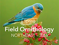spring field ornithology course now available online