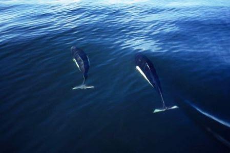 delfinaria-kitodi-115032