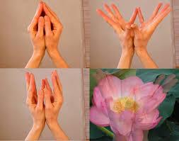 Image result for lotus mudra