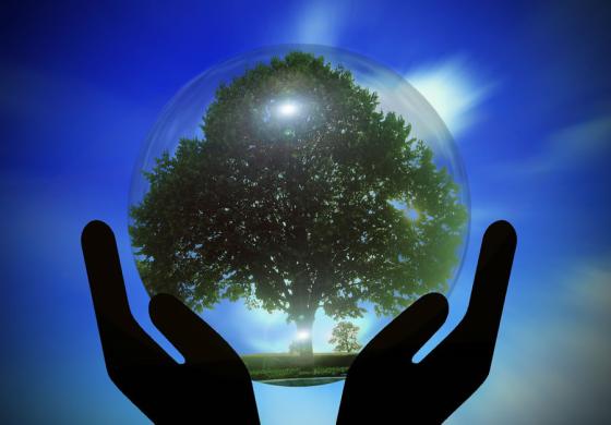 ärbol en esfera de cristal