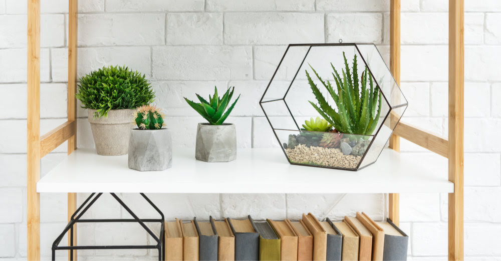 Bring plants into your room