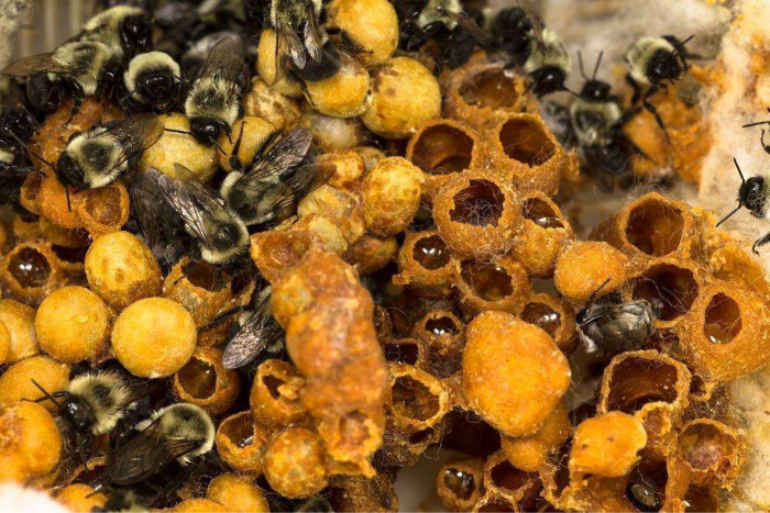 Vermont Research News: Wild bees, acupuncture, civil discourse and more…