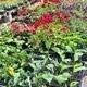 Annual Plant Sale