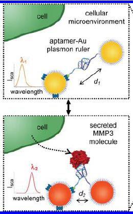 Plasmon ruler_MMP3