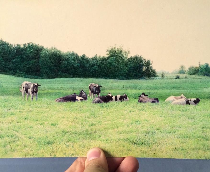 Sanchez NicolasV Midwest grass