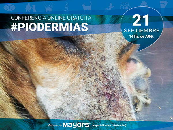 Conferencia para veterinarios sobre Piodermias