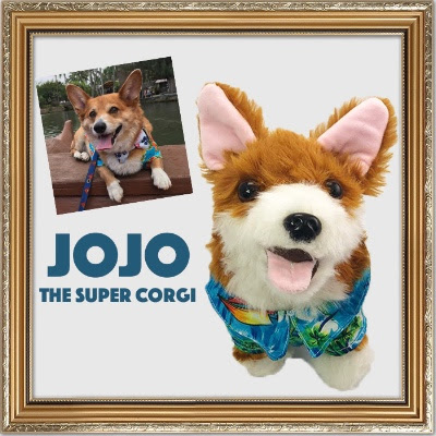 Jojo the Corgi is our NEW Pets...