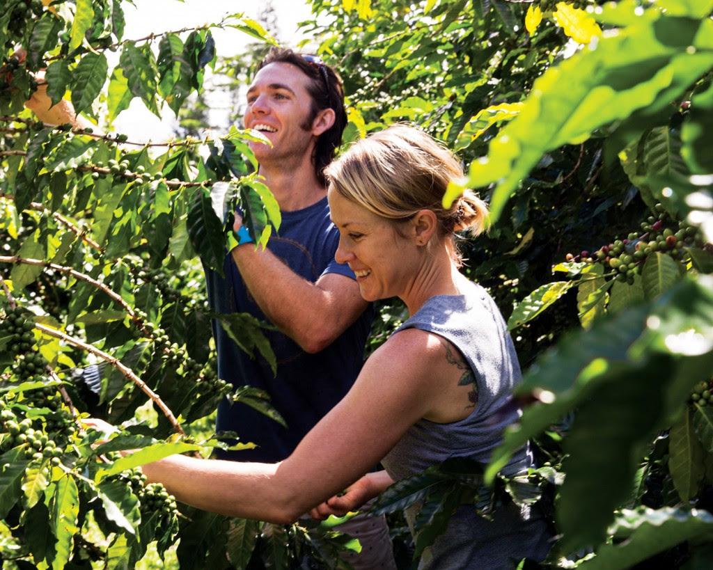 Photo: courtesy of Big Island Coffee Roasters
