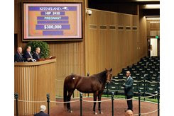 Ducru in the ring at the Keeneland November Sale