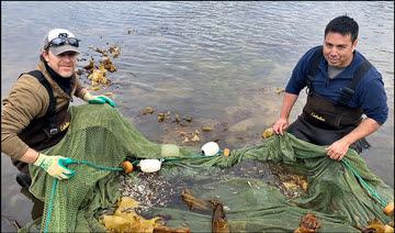 Cod fieldwork