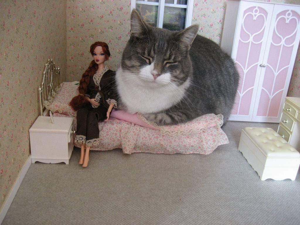 weird cat pic