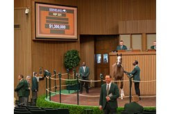 The Tapit colt consigned as Hip 331 in the ring at the Keeneland September Sale