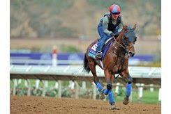 Untamed Domain gallops ahead of the Breeders' Cup Juvenile Turf at Del Mar