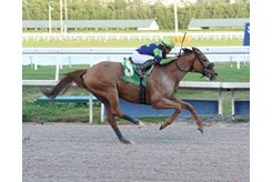 War Story wins the Harlan's Holiday Stakes at Gulfstream Park