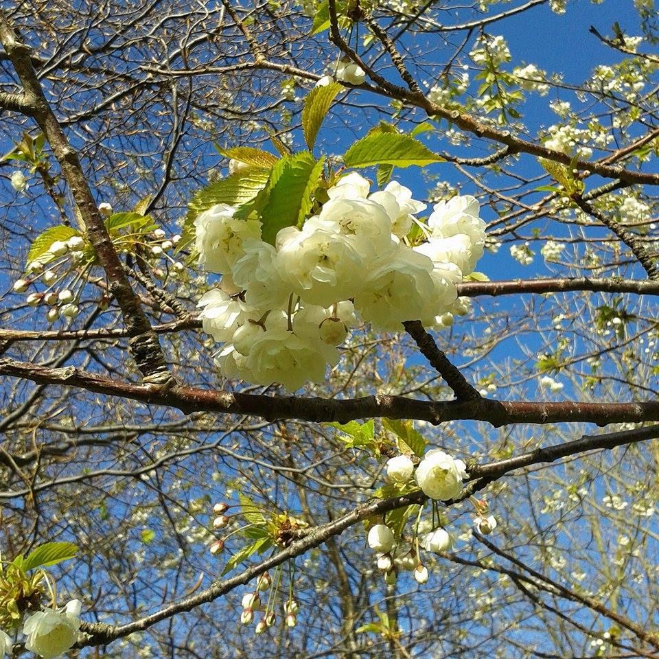 Spring blossom delight
