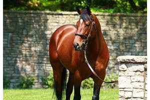 Declaration of War is currently standing in Japan