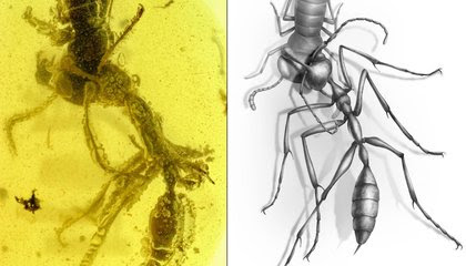Amber Fossil Shows 'Hell Ant' Was Unlike Anything Alive Today