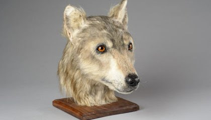 Thanks to Facial Reconstruction, You Can Now Look Into the Eyes of a Neolithic Dog image