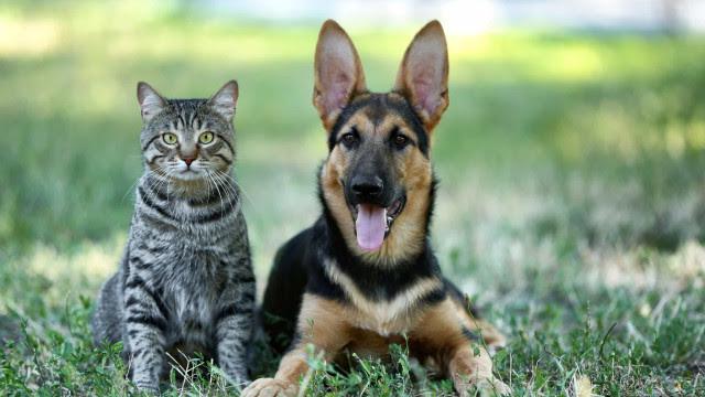 Prefere cães ou gatos? As viagens no Waze vão ficar mais divertidas
