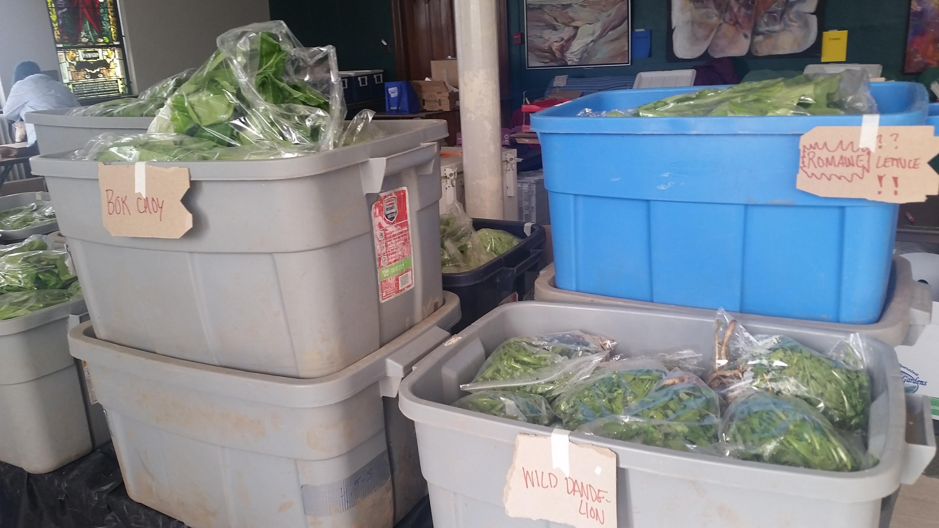 Plastic tubs full of individally bagged greens with cardboard labels affixed on each tub