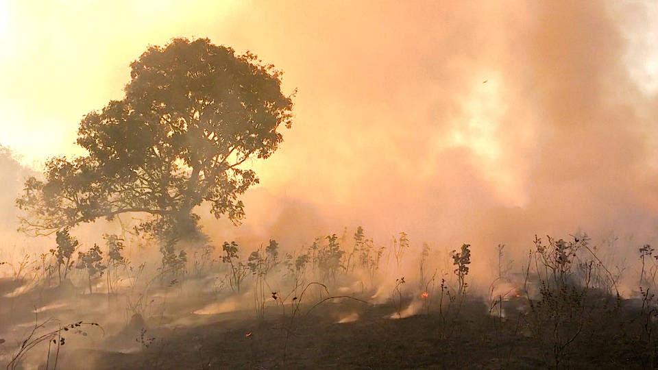 H3 brazil archbishops catholic amazon fires rainforest erwin krautler roque paloschi