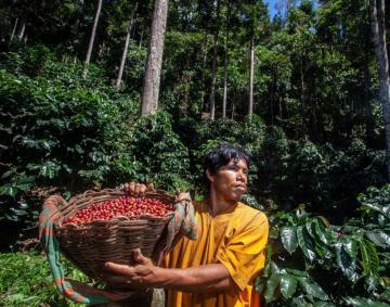 Comunidades indígenas de Junín producen café sin deforestar