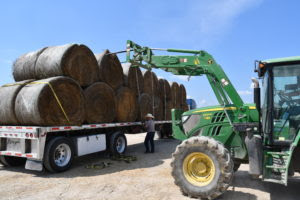 Hay and feed donations were valued at more than $1.3 million, according to Texas A&M AgriLife Extension Service economists. (Texas A&M AgriLife Extension Service photo by Blair Fannin)