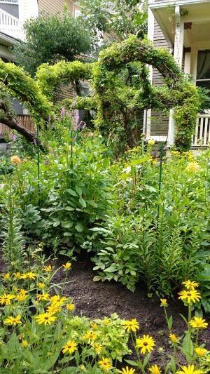 Buffalo gardens