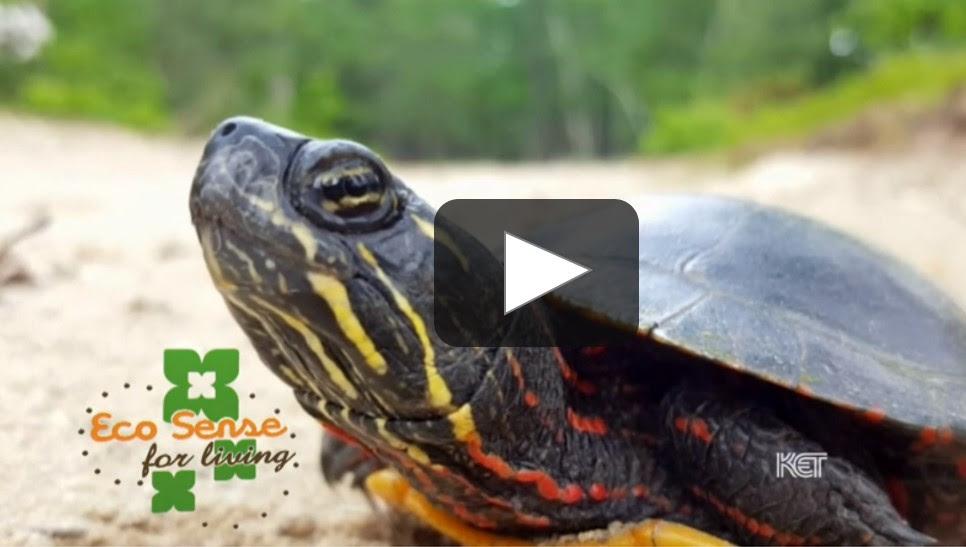 PBS EcoSense Turtle Play